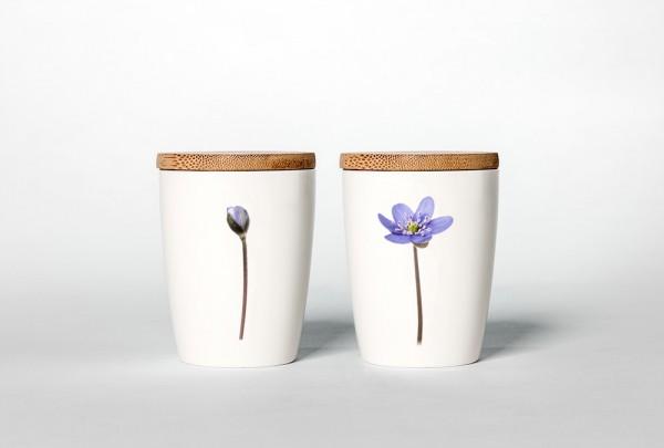 Becher Leberblümchen