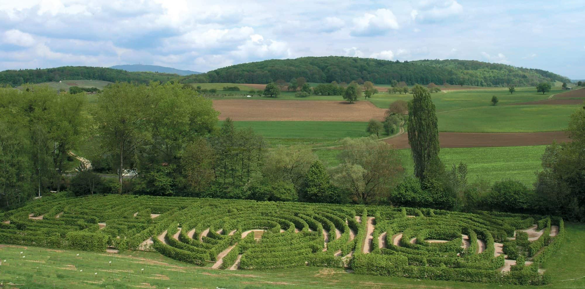 Hainbuchenlabyrinth