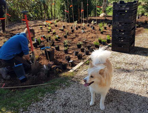 Yellow Brick Road: die Pflanzarbeiten stehen kurz vor dem Abschluss