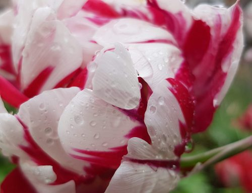 Endlich Regen :-)