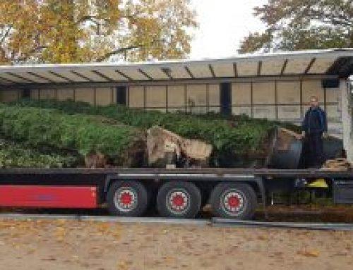 Die neuen Leyland Zypressen sind angekommen ….